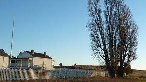 A leafless tree stands at the corner of a white fence in an open landscape, near white buildings.
