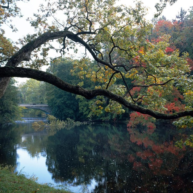 A dark branch with fall-colored foliage curves gently over still, reflective water.