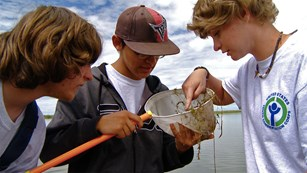 Young scientists examine organisms in a net