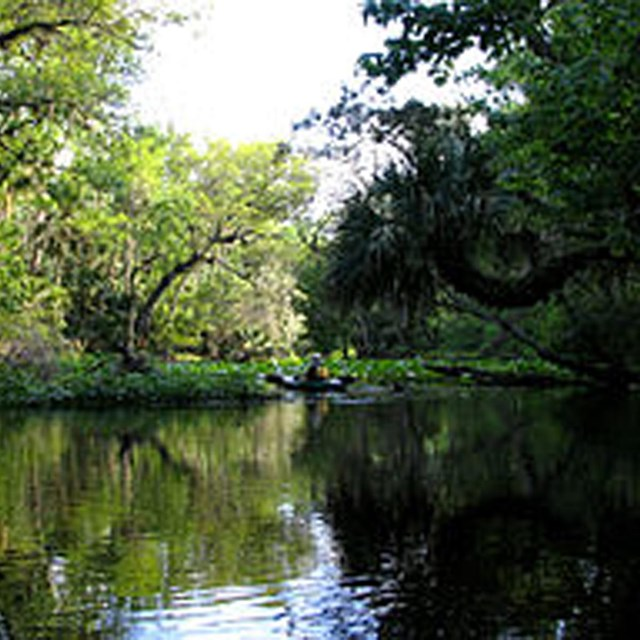 kayaker on calm stretch of river with lush forest in background