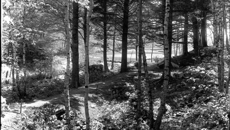 Historic photograph of a trail through forested area