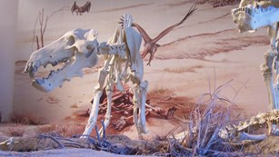 The Dinohyus is featured in the visitor center diorama.