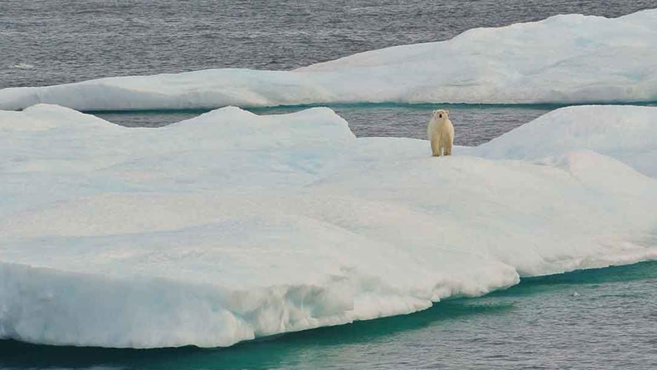 A polar bear stands on ice in the Beaufort Sea.