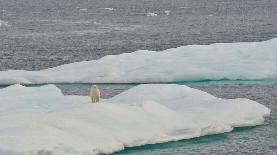 A polar bear on a chunk of ice in the Beaufort Sea.