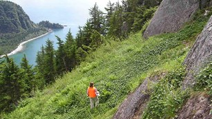 A hiker walks a steep vegetated slope above a fjord, next to a rocky cliff.