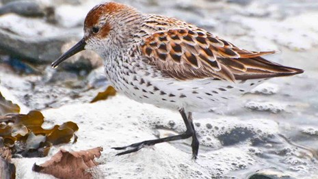 Seabirds and shorebirds are some of the most abundant wildlife in marine and coastal areas.
