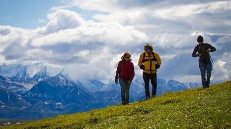 three hikers walk in the mountains in Denali National Park