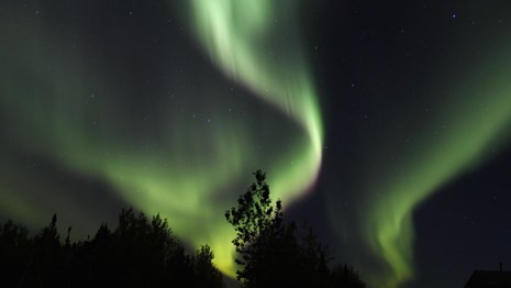 green northern lights dance above tree tops on a clear night