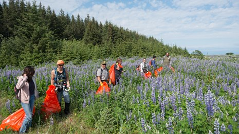 a group of volunteers and park staff pick up trash in Wrangell-St. Elias National Park