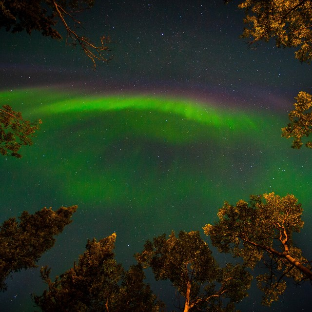 green tinged aurora over trees in a dark sky