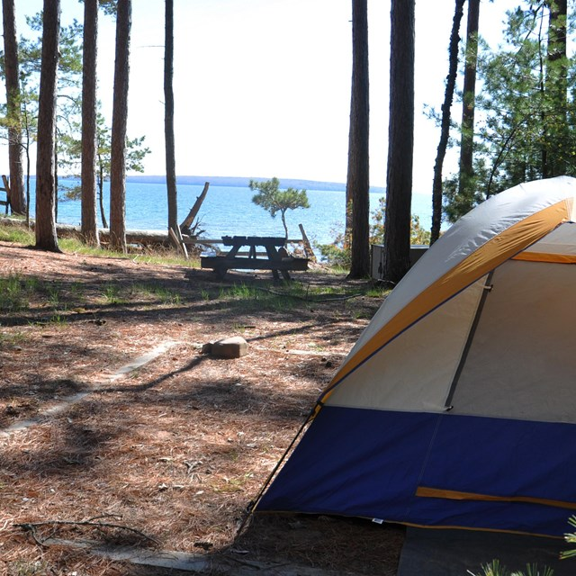 A tent is set up in a small clearing among tall trees.