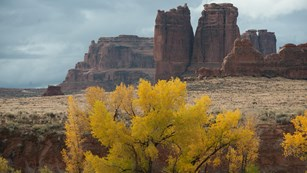 a tree with yellow leaves in front of rock monoliths
