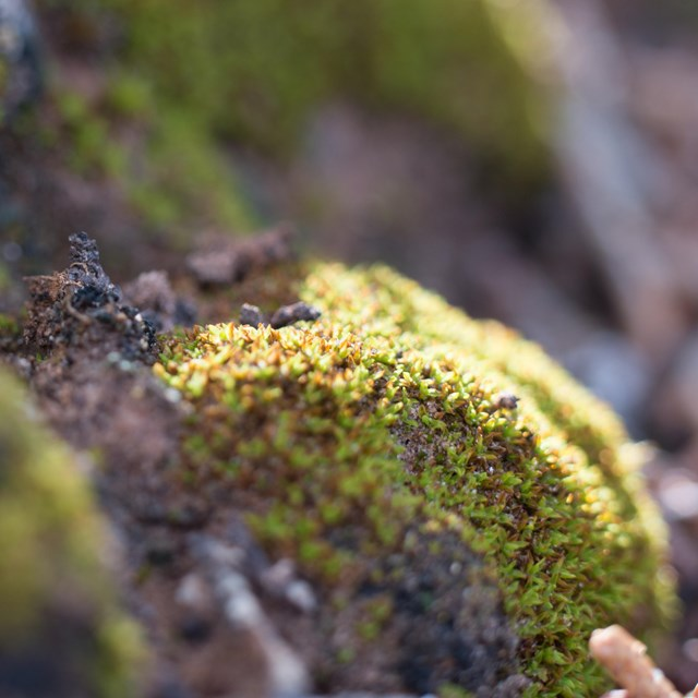a close-up shot of black knobby soil with green moss growing on it