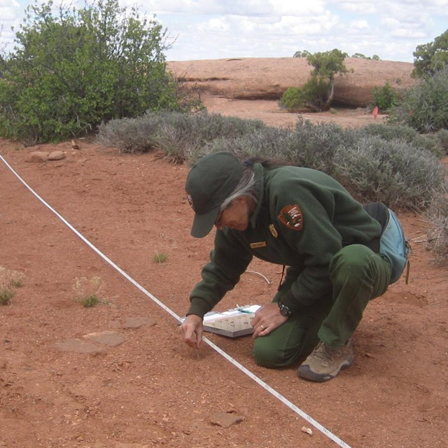 A ranger examines the soil near a long white tape measure