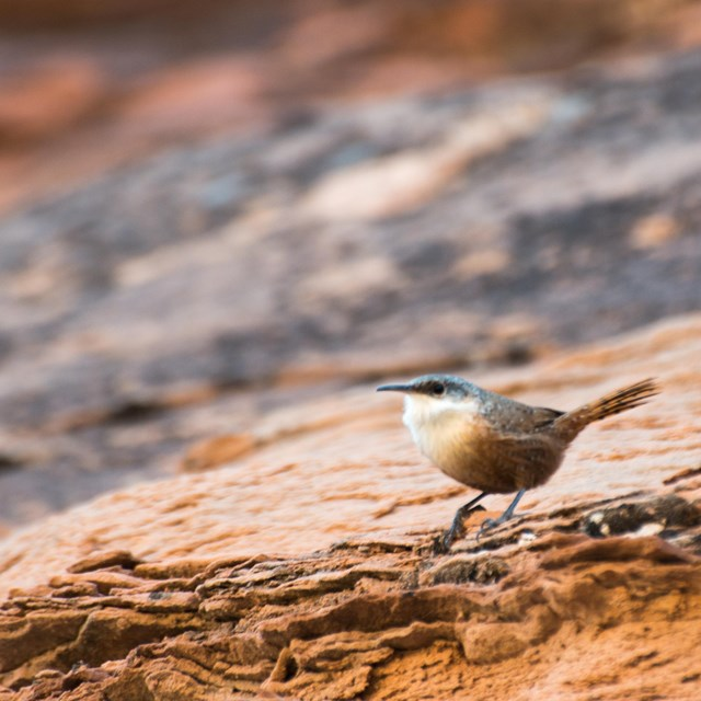 a small, brown bird stands on a rock slope