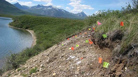 Colorful flags mark archaeological sites along a steep bank in the Brooks Range.