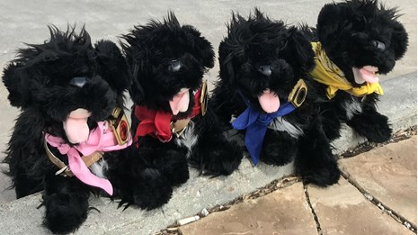 five toy dogs