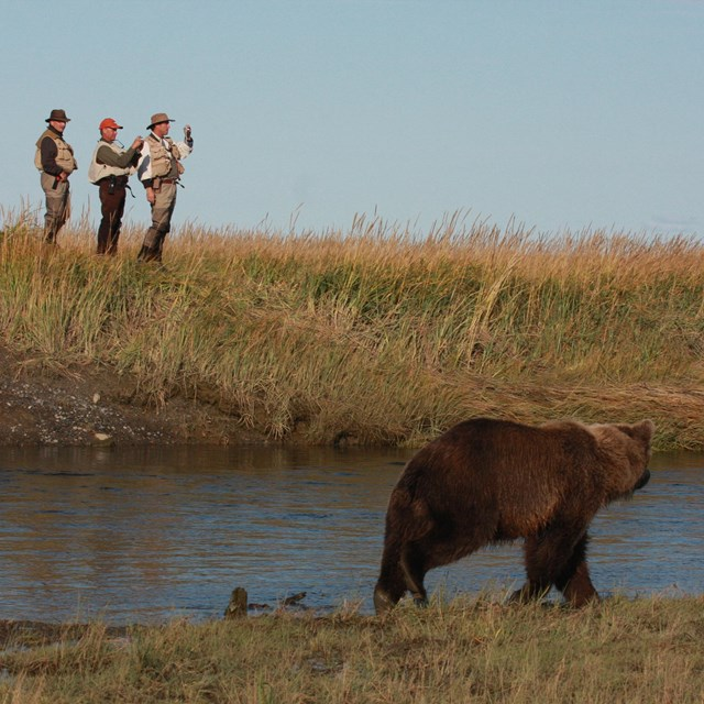 3 men stand on a river bank watching a bear