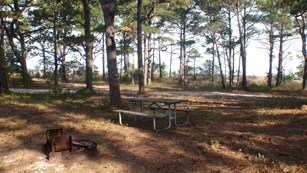 photo of Tingles Island Backcountry campsite showing fire ring and picnic table in forest