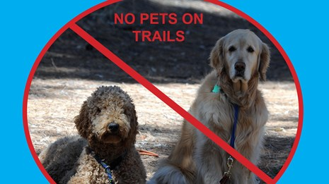 dogs are not permitted on any trails