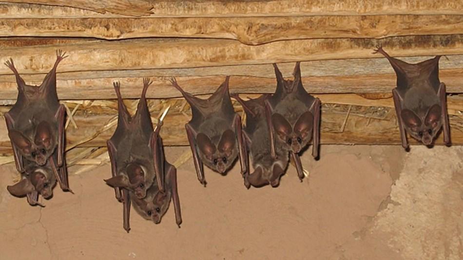 Bat Reciation Day Is April 17