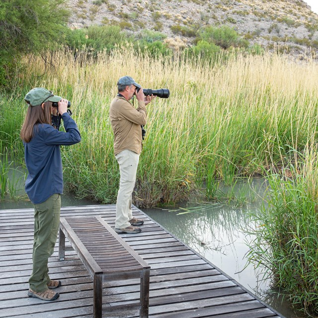 A man and a women stand on a boardwalk over a pond, looking at birds with binoculars and a camera.