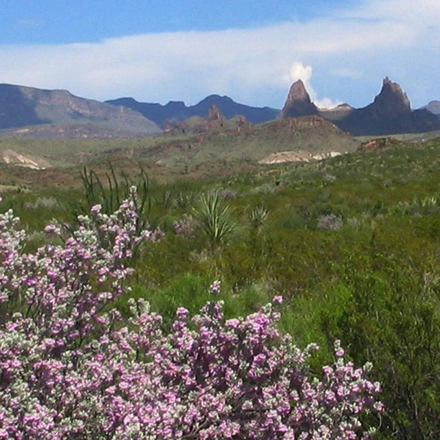 Big Bend News Releases