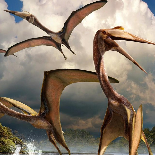 The Big Bend Pterosaur