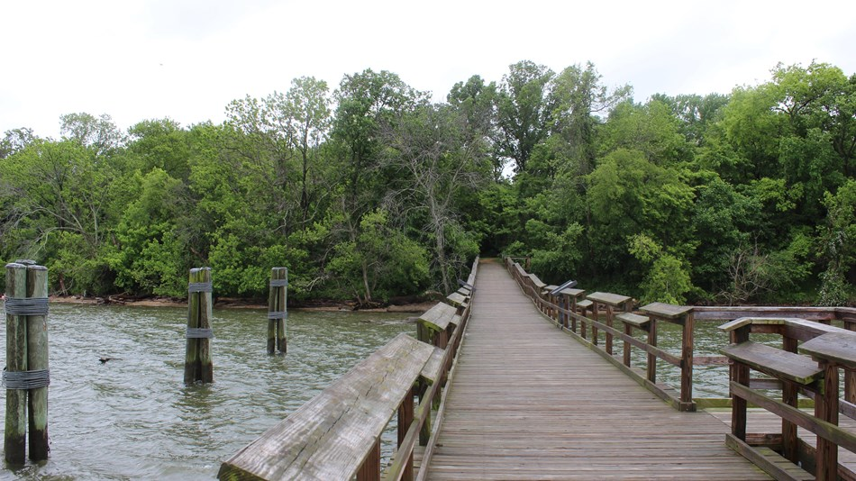 Boardwalk stretching over the water and disappearing into a green forest