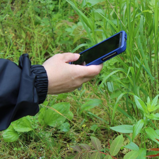 A person holds their smartphone up to take a picture of a plant, using the iNaturalist mobile app