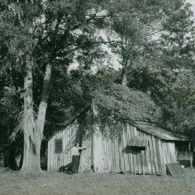 historic black and white photo of an old cabin next to a tree with a man standing out front