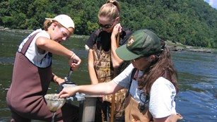 Ranger and volunteers collecting macro-invertebrates in the river