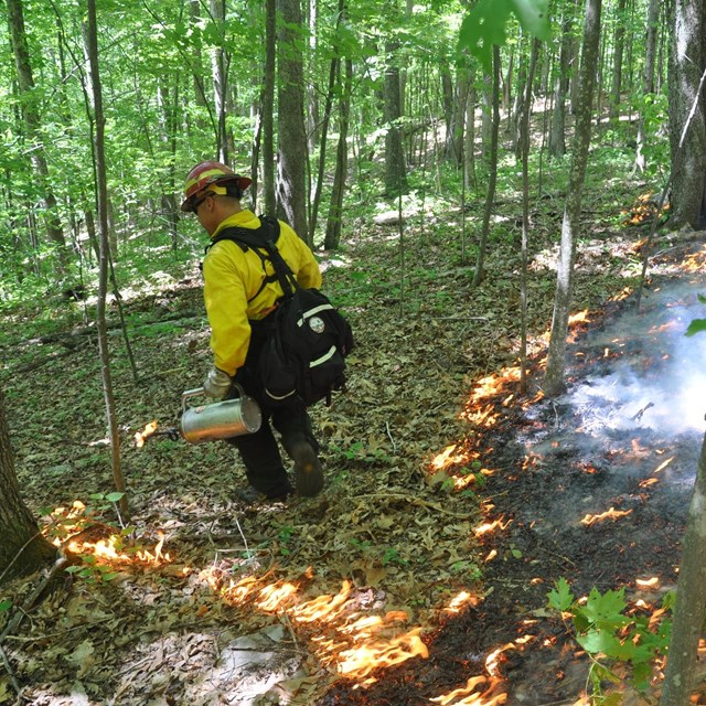 firefighter igniting a prescribed burn