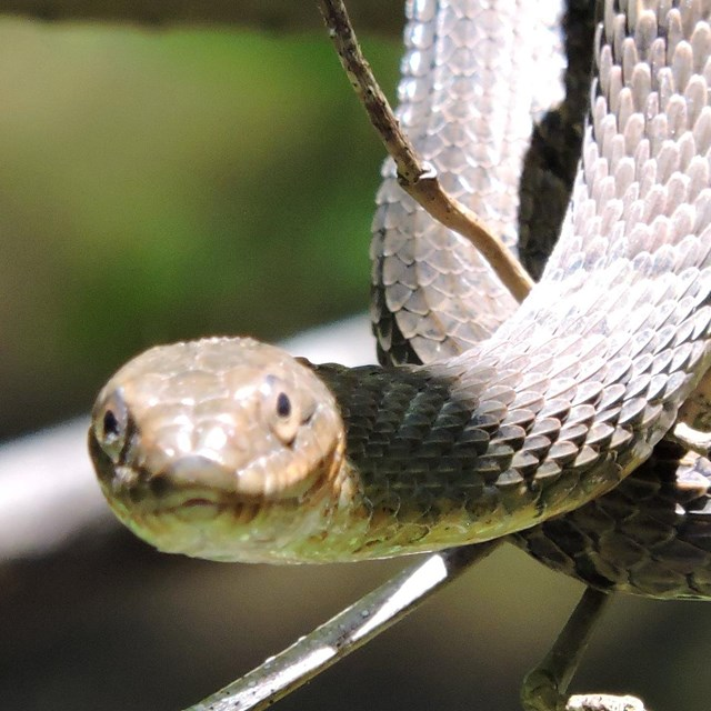 A snake hangs down from a tree branch.