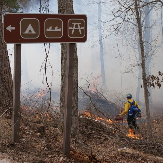 A wildland firefighter conducts a prescribed burn.