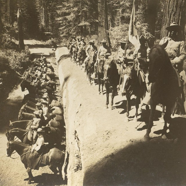 Several army soldiers on horses pose with their mounts on a large, felled tree.