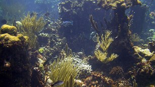 Photo of coral reefs and fish at Buck Island