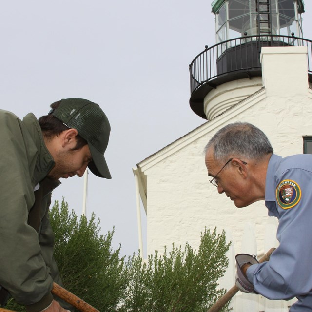 Two men large clippers to trim a green hedge that is planted in front of a white lighthouse.