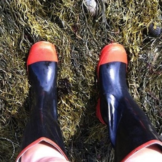 Photo of boots worn by someone in the tidepools