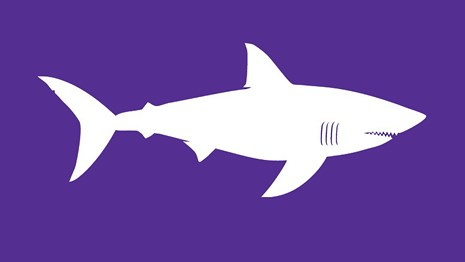 The white silhouette of a white shark stands out on a purple field.