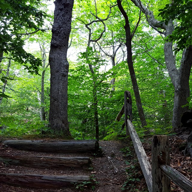A wooded trail goes over a short hill with a wooden rail fence and earthen steps.