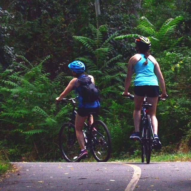 Bicyclists wearing helmets ride along a paved wooded trail.