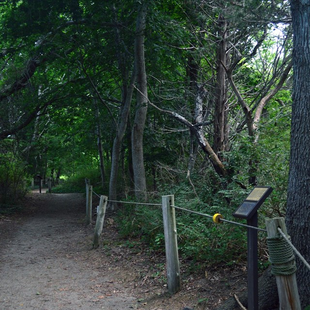 A trail with a rope railing extends through a forested area. A sign is placed in front of a tree.
