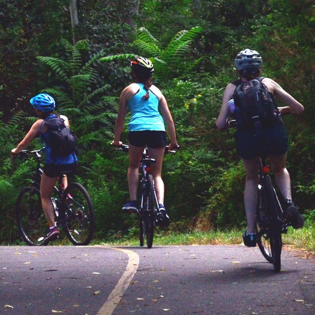 Three bicyclists head down a paved wooded trail.