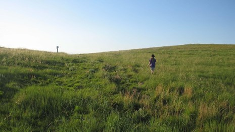 A person walks up a hill covered with grass, with obvious ruts.