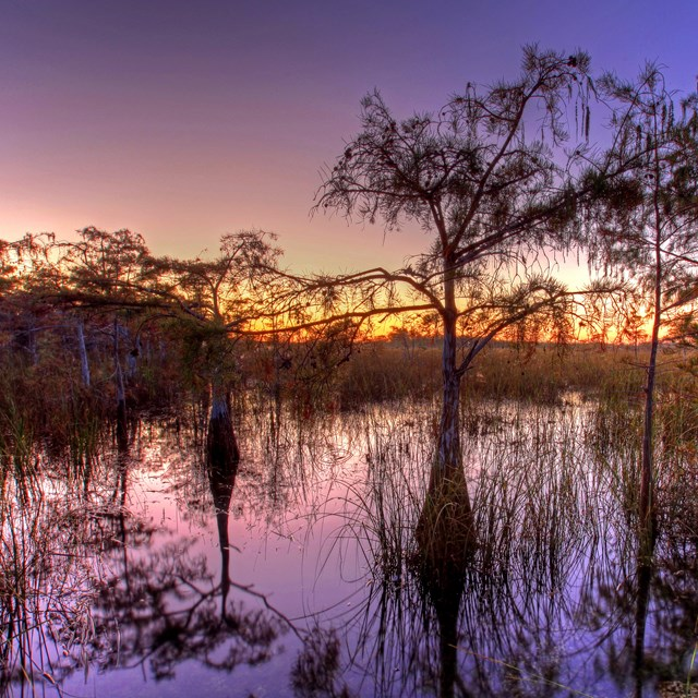 Everglades National Park at sunset with a purple sky