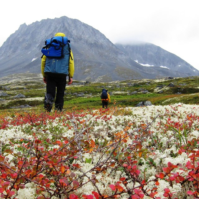 Two backpackers hike through colorful vegetation with mountains in the background