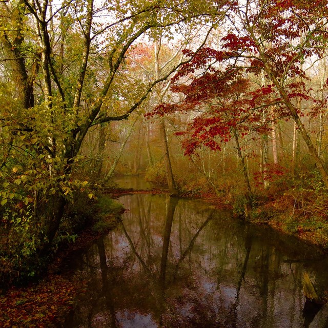 trees with fall colored leaves line a winding creek