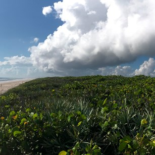 Barrier Island Ecosystems