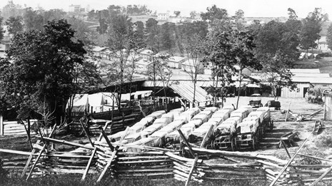 Rows of Civil War wagons lined up in a field.